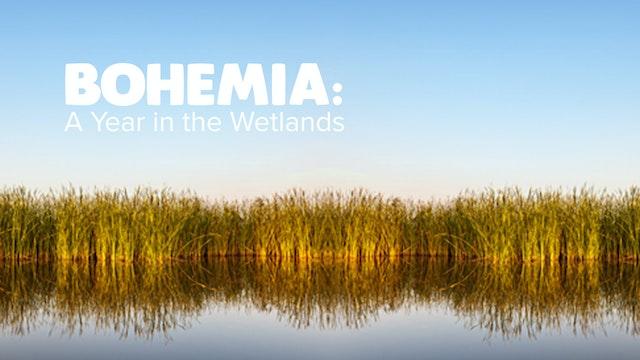 Bohemia: Year in the Wetlands