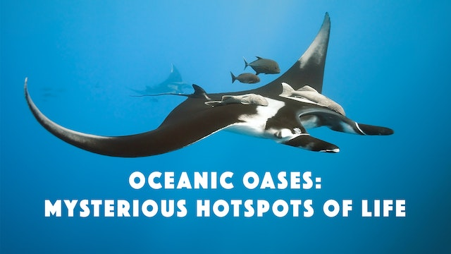 Oceanic Oases: Mysterious Hotspots of...