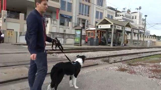 How Im Training My Dog To Listen in Public!