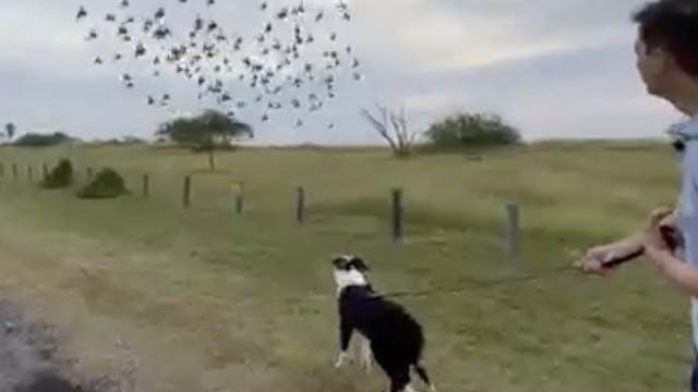 ZenGov: Good Dog Behavior in Public