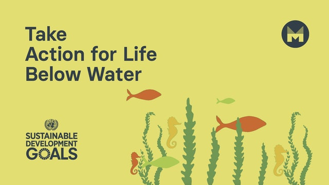 7. Take Action for Life Below Water (Ages 11 - 17)