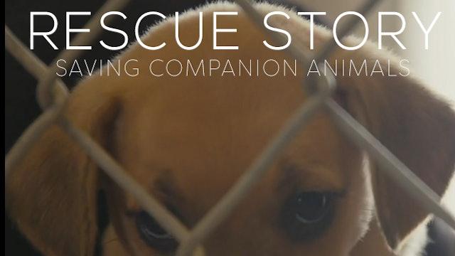 Rescue Story: Saving Companion Animals