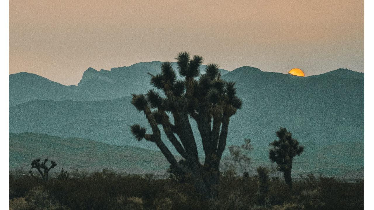 Blooming Mojave