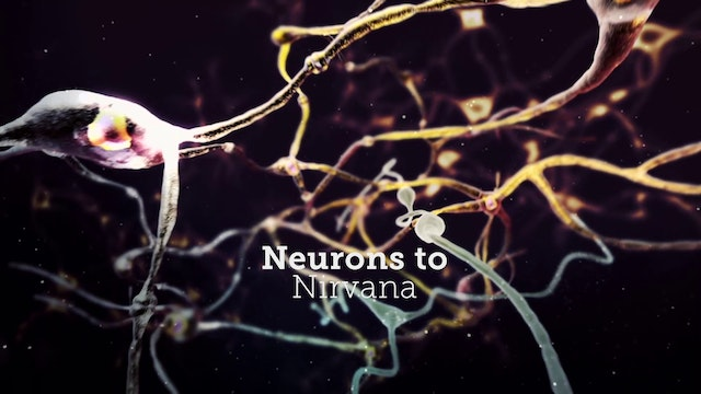 Neurons to Nirvana - Rent