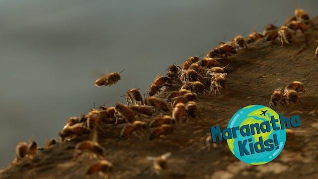 Bees Building Schools
