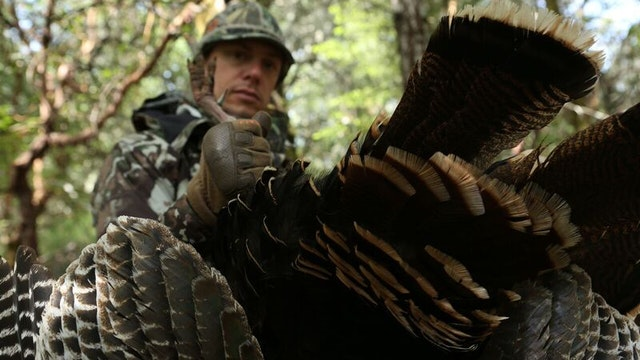 MEATEATER TURKEY HUNTING COLLECTION