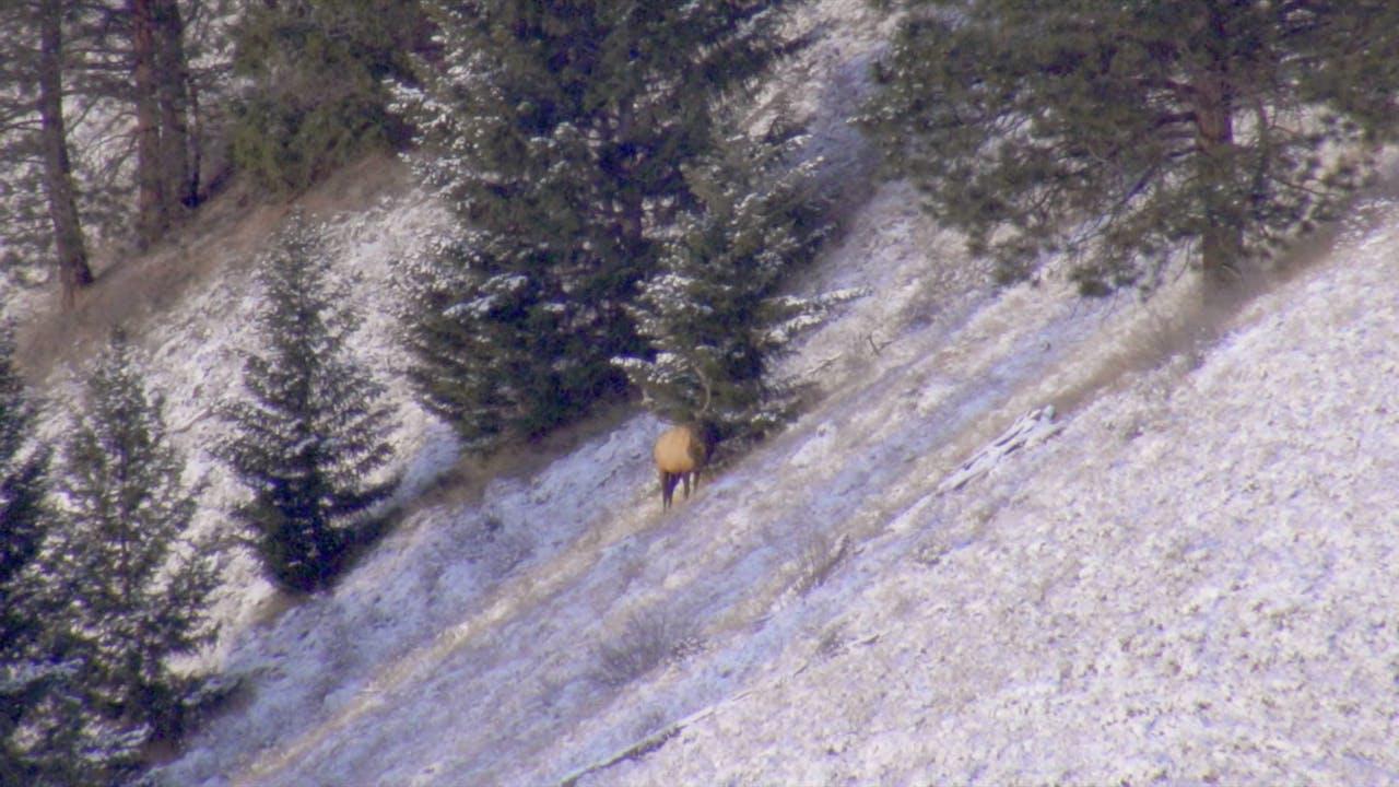 S7-E08: Remi And Steve, Elk Hunting Again