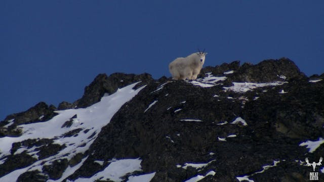 S1-E04: The Rugged Peaks: Alaskan Mountain Goat