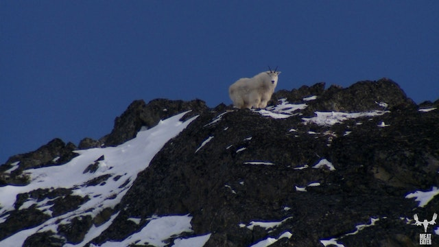 The Rugged Peaks: Alaskan Mountain Goat