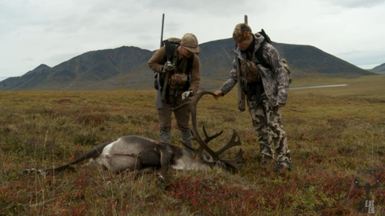 VOLUME 4, EPISODE 1: TRUE NORTH, ALASKA NORTH SLOPE CARIBOU
