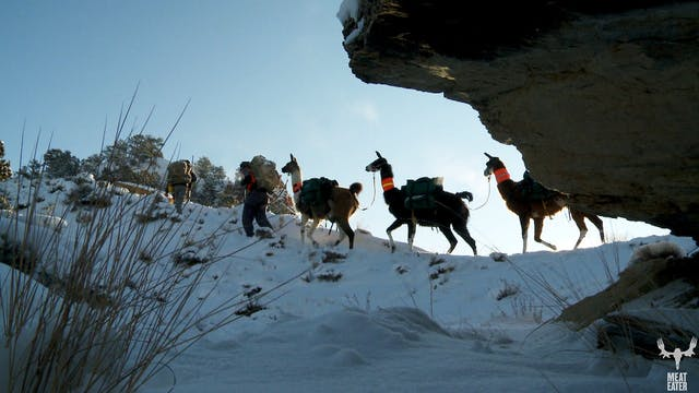 S1-E07: Brotherhood, Badlands and Pack Llamas: Montana Mule Deer