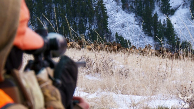 ABOUT TIME: HELEN AND BRITTANY ELK HUNT IN MONTANA
