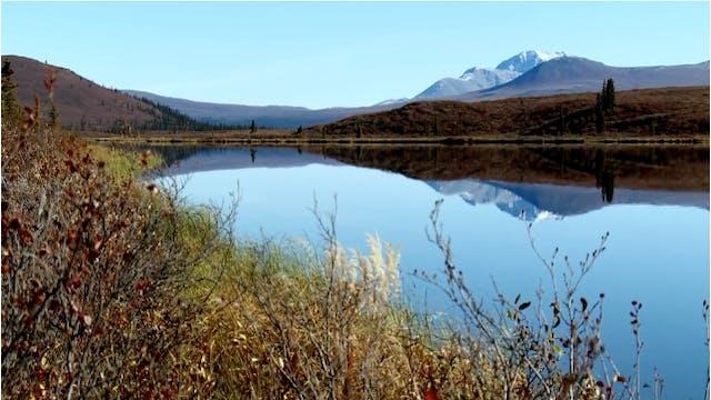 S5-E01/02: Yukon Giants: Northern Alaska Moose Parts 1 & 2