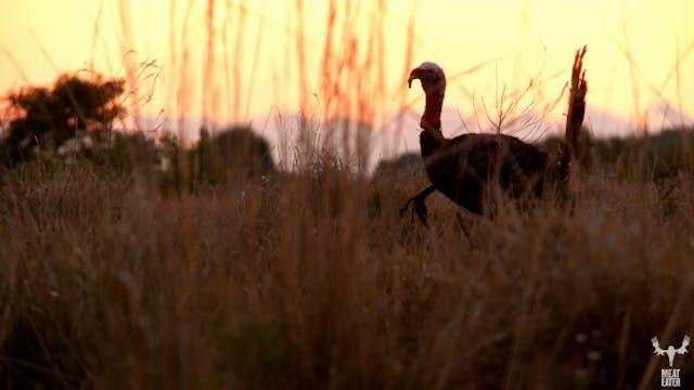 S4-E09: Spring Break: Florida Osceola Turkey