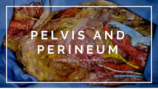 Pelvis and Perineum
