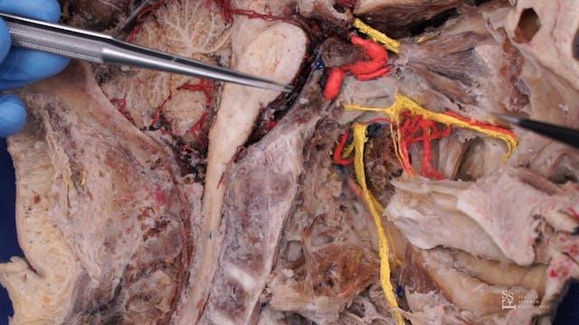 Trigeminal Nerve (Japanese)