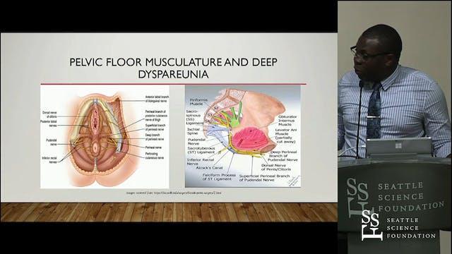 The Clinical Anatomy of Dyspareunia