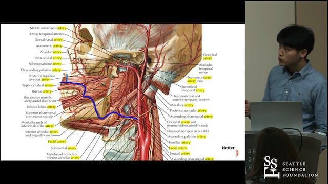 An Oblique Columellar Artery Variant