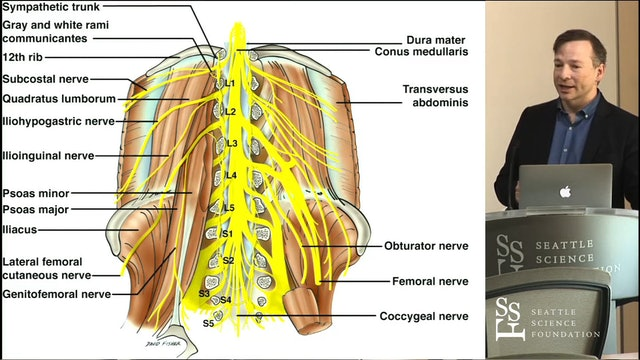 Anatomy of the Lumbar Plexus