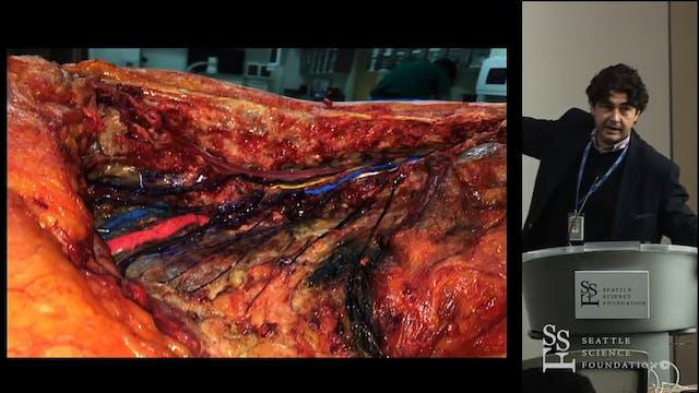 Anatomy of the Lumbar Plexus