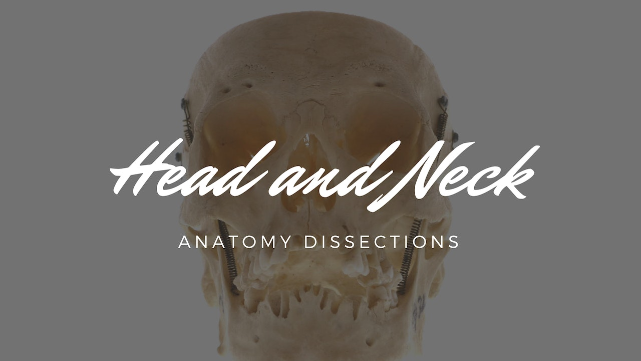 Head and Neck - Anatomy Dissections