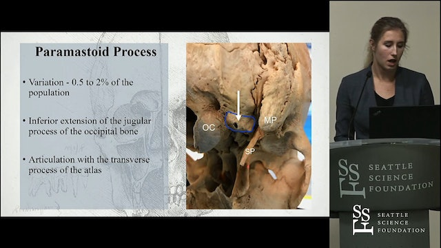 The Paramastoid Process- Anatomy and Clinical Implications