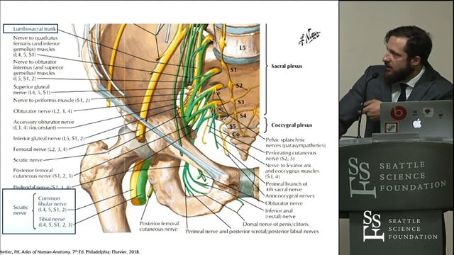 A Variant of the Sciatic Nerve and it...