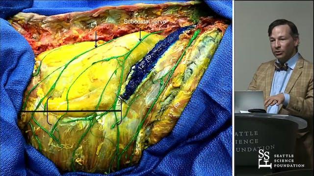 Anatomy of the Lumbar Plexis