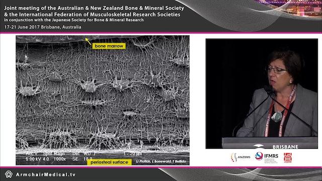 Osteocytes and mechanosensory pathway Prof Teresita Bellido