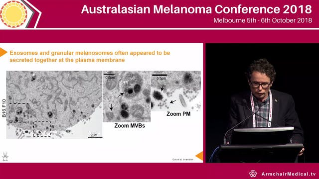 Dynamic regulation of melanoma cell p...