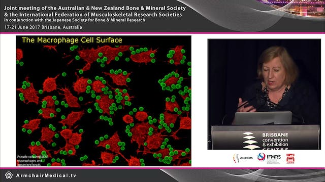 Imaging the macrophage surface Dorsal...