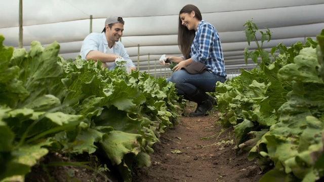 S1-Clip 19 - La Alimentacion Vegetariana - Tips & Consejos