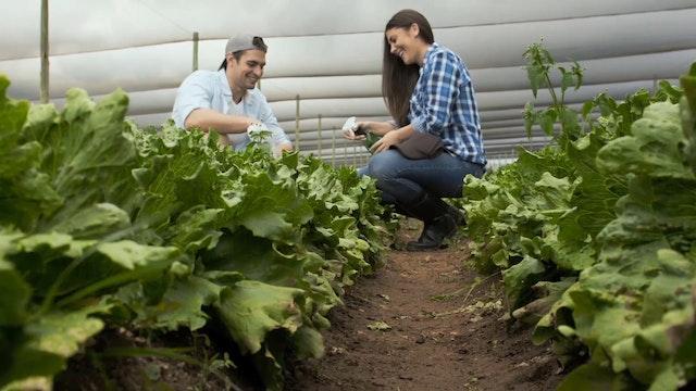 S1-Clip 19 - La Alimentacion Vegetari...
