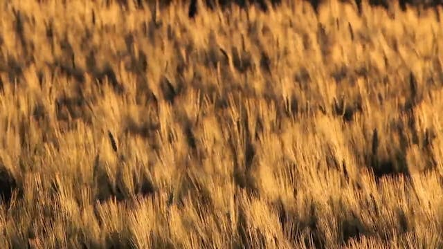"DS3048 - Nature Series - ""Sunset Wheat"" - 38mn - Full HD"