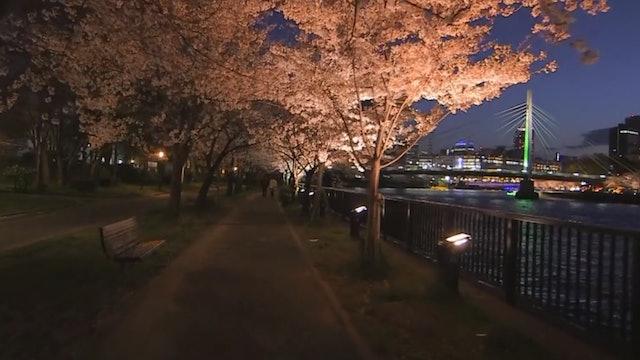 """Twilight Walk with Illuminations""-S3529"