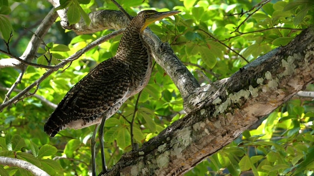 """Birds of the Rainforest""-S2600"