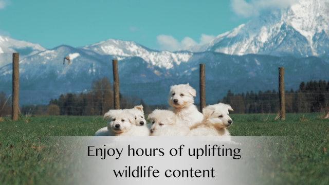 "Trailer-""Wildlife Sessions"""