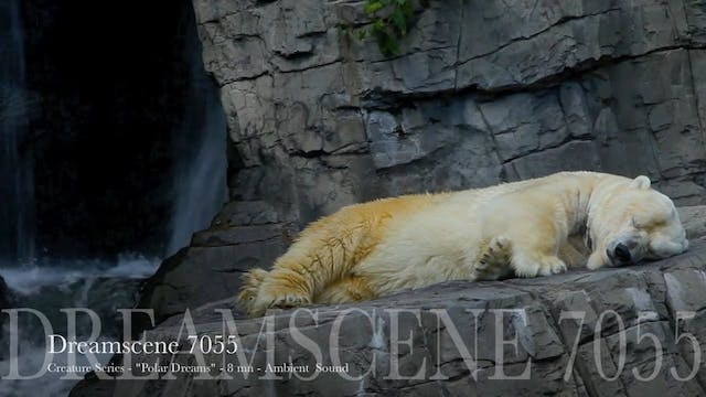 "DS7055 - Creature Series - ""White Bear dreaming on rock"" - 15mn - Full HD"