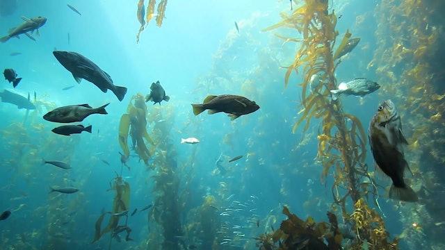 """Deep Ocean Relaxation""-S2644"