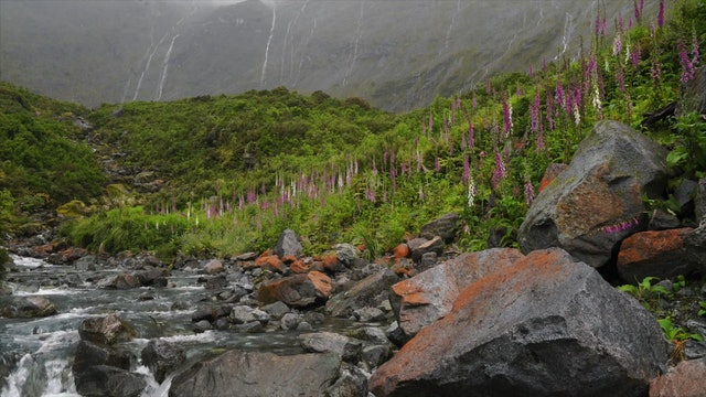 """Wonders of New Zealand""-S1319"