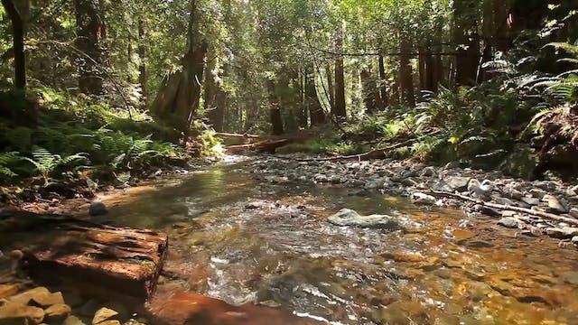 """""""Red Wood Forest Rejuvenation""""-S1381"""