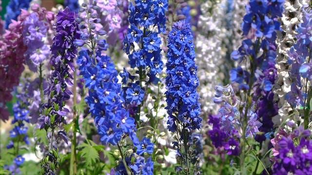 """""""Spring Super Bloom""""-S1327"""