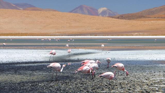 """""""Wildlife Wonders South America""""-S1324"""