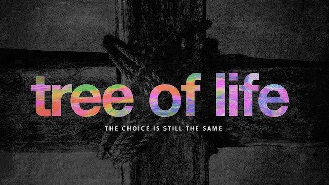 Tree of  Life   Chris Franke