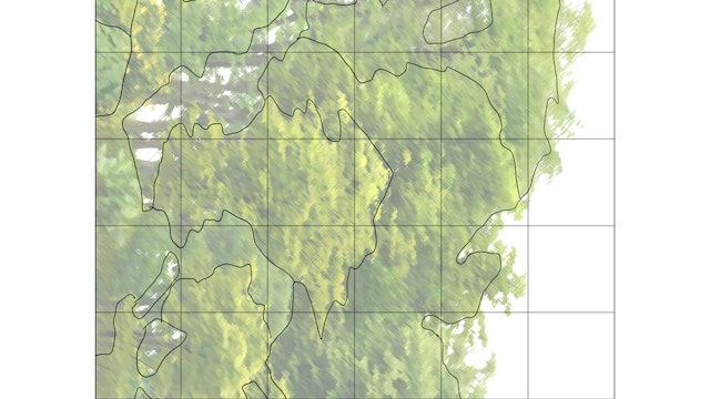 Tree Study Sketching Diagram.jpg