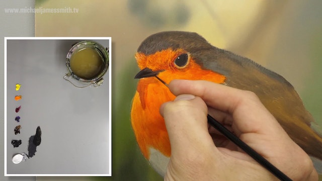 How To Paint a Robin Part 4