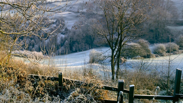 December Frost Reference Photo.jpg