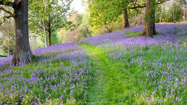 Bluebell Hill Reference Photo.jpg