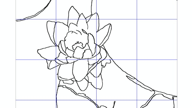 How to Paint a Lilly Flower Sketching Diagram.jpg
