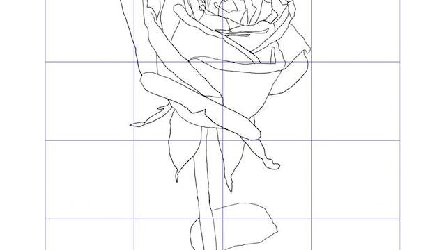 Rose Tutorial Sketching Diagram.jpg